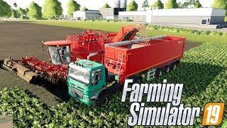 WIELKI SPRZĘT ROLNICZY DO BURAKÓW - Hogaty i EKIPA - Farming Simulator 2019 Po Polsku #04 [PC/HD]
