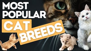Most Popular types of Cat Breeds People like to Pet