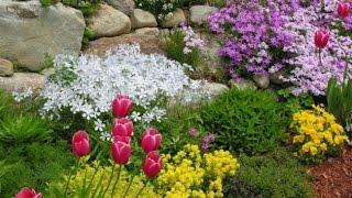 Квіткові рослини.  Розмноження рослин
