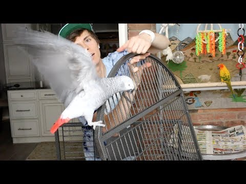 Setting Up My African Grey's Cage! -w/ Gypsy & Mango-