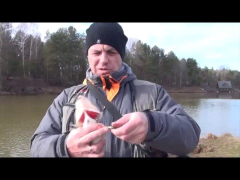отводной поводок для ловли судака и окуня