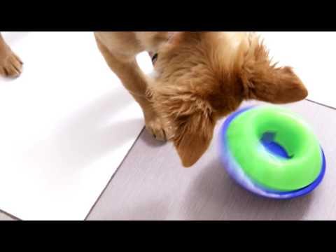 KONG Tiltz - Dog Toy