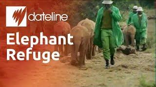 Kenya's elephant orphanage