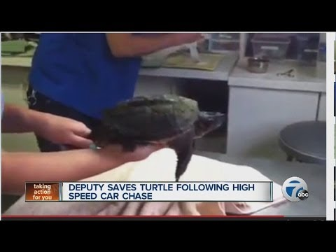 Deputy Saves Turtle Following High Speed Car Chase