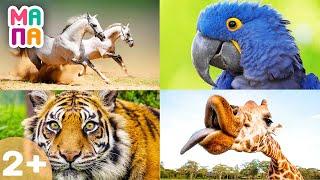 Учим животных и цвета/ Развивающее познавательное видео / Для малышей от 2 лет / ВИКТОРИНА для детей