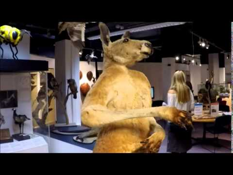 Austrália -  Hyde Park / Australian Museum (Sydney)