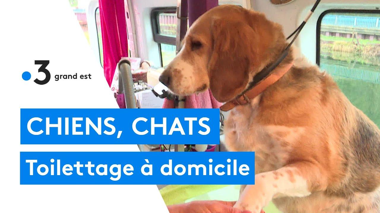 Une toiletteuse à domicile pour les chiens et les chats en Meuse