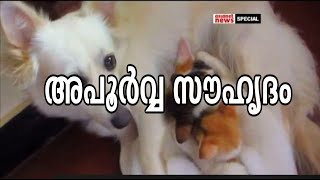 A rare friendship of Dog and cats :അപൂര്വ്വ സൗഹൃദം | Asianet News Special