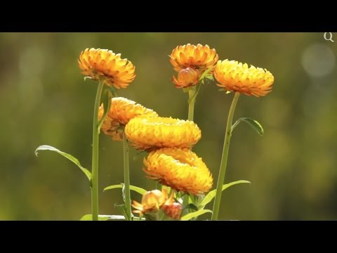 National Botanic Gardens of Wales - Nos 1 Wonder of Wales