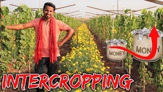 पैसा डबल-खर्च आधा मिश्रित खेती । Intercropping   Mixed Cropping   Multiple Cropping
