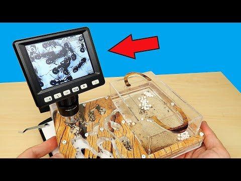 Мои муравьи под Микроскопом! Теперь мне ЭТО приснится! Микроскоп из Китая, Посылка, Распаковка