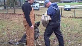 Schutzhund Training Obedience & Protection Tracy Betenbaugh's New Dog
