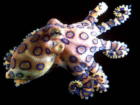 Octopus: Beautiful Ocean Creatures - Nature Documentary