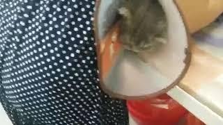 Кошке делают укол! Как она ведёт себя в этот момент!