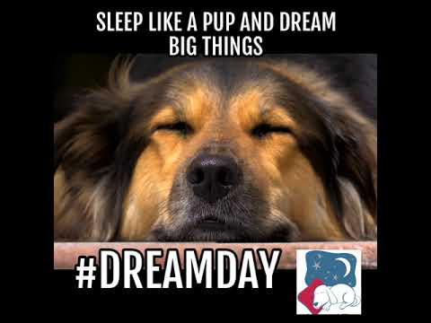 Sleep like a Pup and Dream Big Things