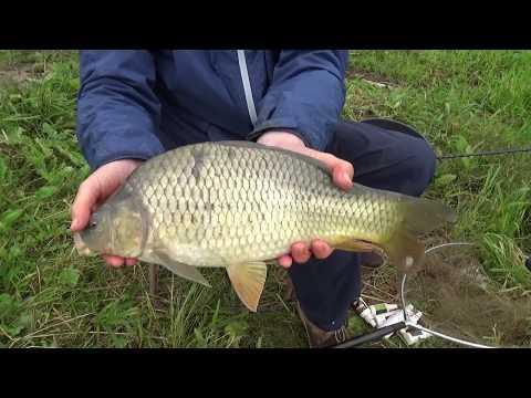 Рыбалка в Савельево.Ловля карпа на платном водоеме.