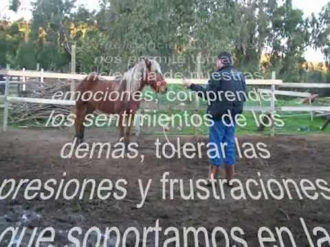 taller-de-inteligencia-emocional-asistido-con-caballos