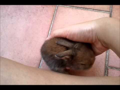 Coco's Litter : 3 week old bunnies