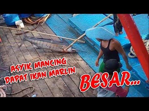 ASYIK MANCING DAPAT IKAN MARLIN BESAR.....