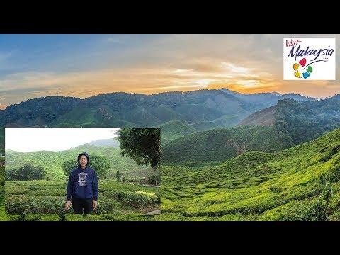 Cameron Highlands Tea Valley ★Scenic★ ★Tropi-Cool★