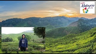 Cameron Highlands Tea Valley ★Scenic★ ★Tropi-Cool★
