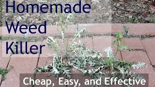 Homemade Weed Killer (Natural Weed Killer - Alternative to Roundup)