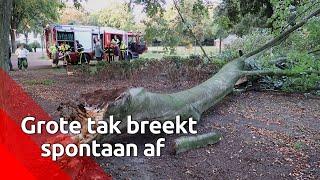 De afgebroken tak miste de vrouw uit Oosterhout en haar hondje op een haar