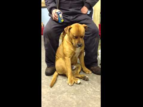 Exhausted dog falls asleep sitting up