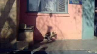 Собака гоняется за хвостом