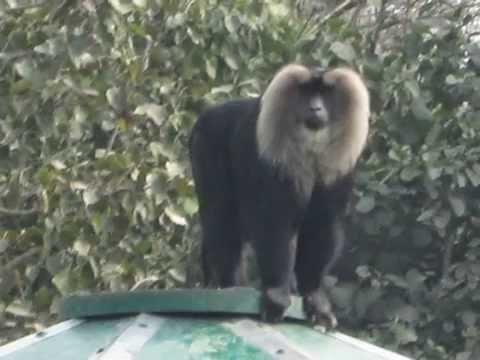 National Zoological Park (Delhi)