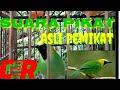 Suara Pikat Asli Pemikat Cucak Ranting  Mp3 - Mp4 Download