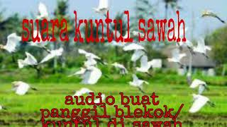 Download Mp3 Suara Kuntul Sawah