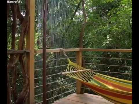 most expensive tree house in d world - Most Expensive Tree House In The World