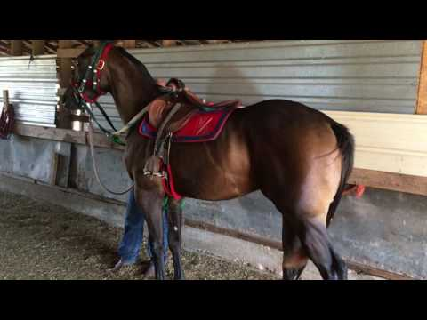 Being saddled for the 2nd time ever is Lord Of War (Carters CartelxJust Wild Enough(First Down Dash)