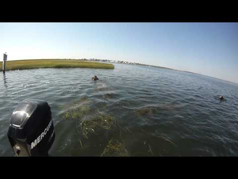 Diving the Great South Bay Long Island