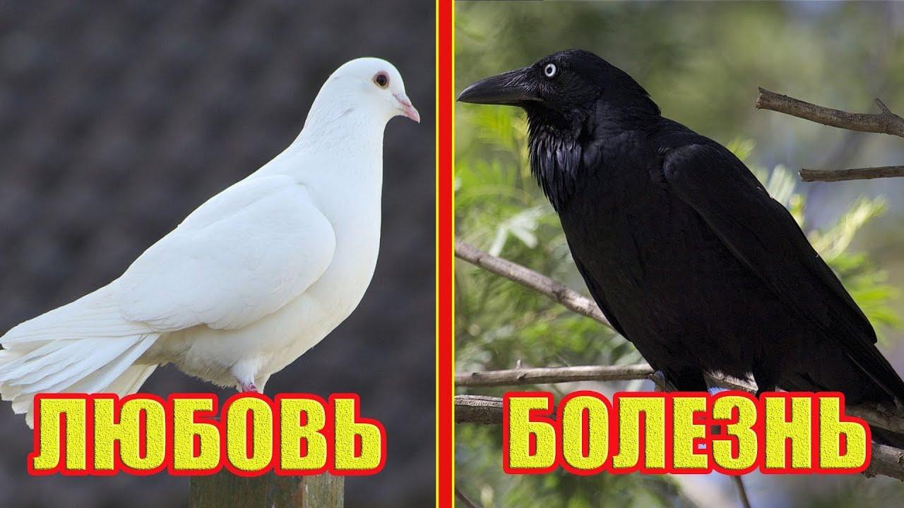 Вот к чему птица садится на окно! К чему птица бьется в окно?! Приметы и Суеверия!