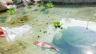 【池作り】ついに魚、入れてみた‼︎‼︎‼︎‼︎‼︎‼︎ thumbnail