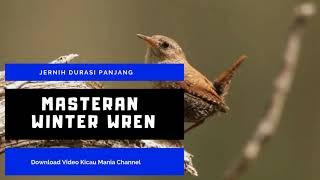 Terapi Suara Burung Biar Cepat Gacor l Masteran Winter Wren Durasi Panjang mp3