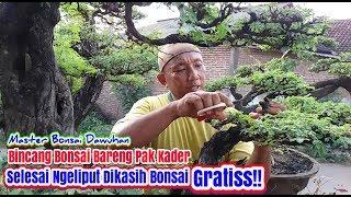 Gambar cover Review BONSAI Pak KADER Pulangnya diKasih GRATISS! (Pebonsai SENIOR Dawuhan Masternya bonsai SERUT)