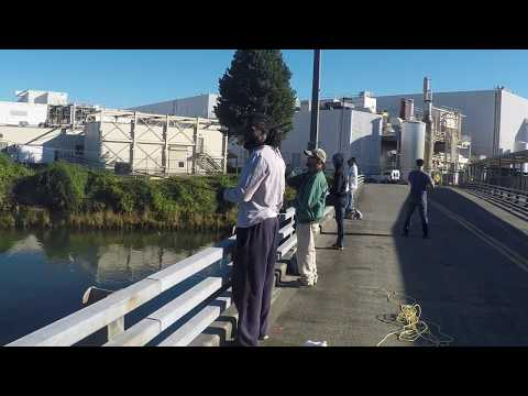 DUWAMISH RIVER FISHING FOR PINKS 2017 !!!