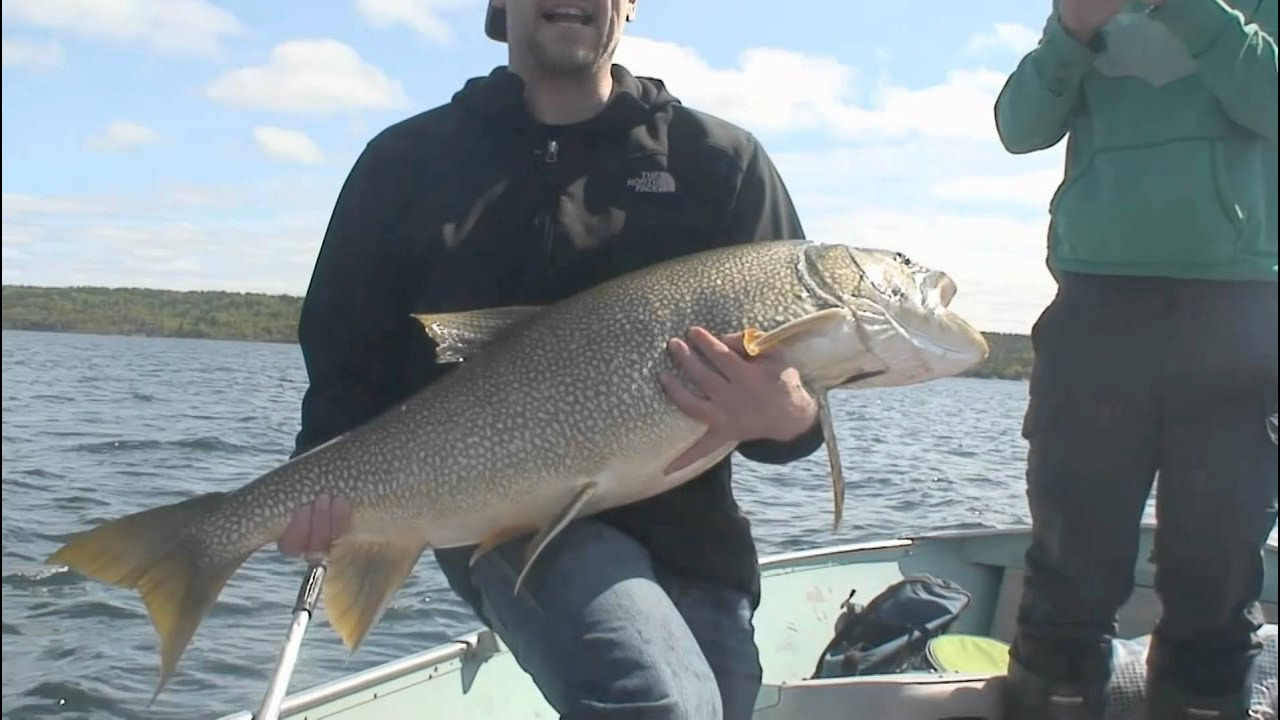 big fish lake trout prosperous lake yellowknife northwest