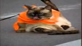 911 приколы животных фото +с надписями