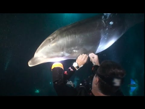 Dolphin Rescue in the Realm of Manta Rays / Martina Wing