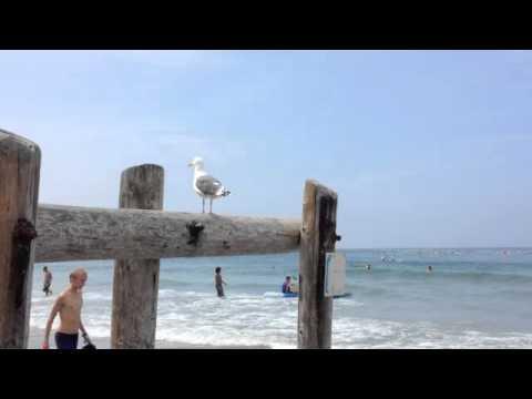 La Jolla Shores Beach area