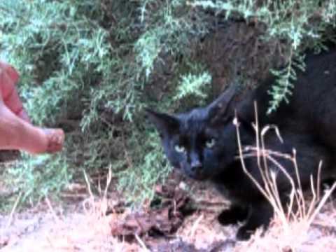 Felini a caccia: attacco alla Salzizz'