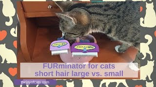 Furminator For Cats Short Hair Large Vs Small Cat Chat With Heidi Youtube