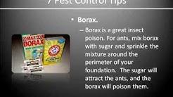 Bed Bug Exterminator Kenosha WI|(262)977-0410|Bed Bug Removal|Pest Exterminator Services Kenosha|WI