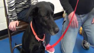"""""""Dog Speed Dating"""" At The Buker Community Center (ALL ADOPTED)"""