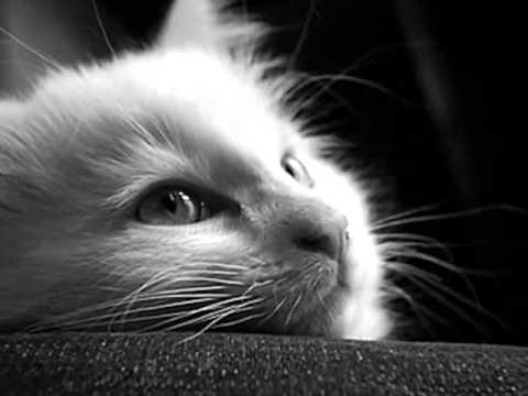 Trilussa - La morte der gatto