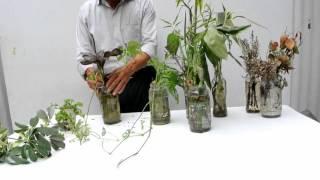 Como cuidar las plantas de agua